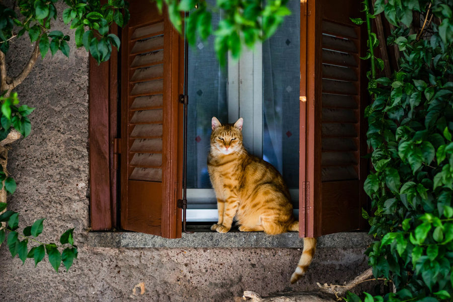 A random feral cat outside of Rome. Animal Animal Themes Cat Day Domestic Animals Domestic Cat Feline House Houseplant Mammal One Animal Outdoors Pets Plant Roma Sitting Stray Animal Whisker Zoology
