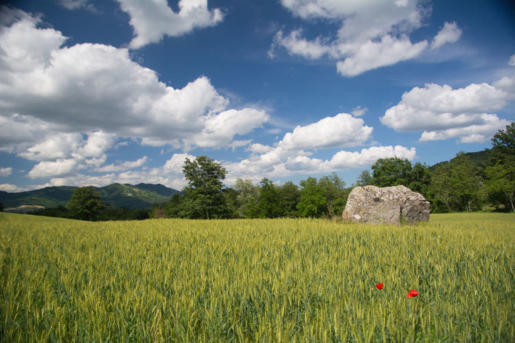 Summer landscape. Meadow Meadow Flowers Sky And Clouds Landscape Green Color Grass Scenics View Into Land Backgrounds Tree Stone Color Of Nature Tree Cereal Plant Rural Scene Agriculture Field Irrigation Equipment Crop  Sky Cloud - Sky Landscape Full Frame Sky Only Grass Area Grassland Grazing Cultivated Land Tea Crop