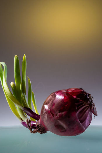 Romantic Onion Close-up Freshness Food And Drink Healthy Eating Indoors  Food No People Still Life Studio Shot Red Nature Plant Vegetable Green Color Focus On Foreground Copy Space Growth Beauty In Dexay