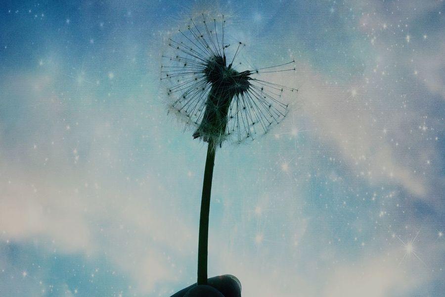 Good night、ヒカリノセカイ… 空 宇宙 星 銀河 ギャラクシー キラキラ 花 綿毛 タンポポ