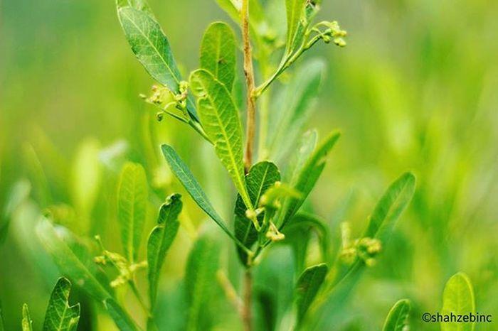 Plants are essentials.... Naturelove Macrophotography Greenplants Shahzebinc