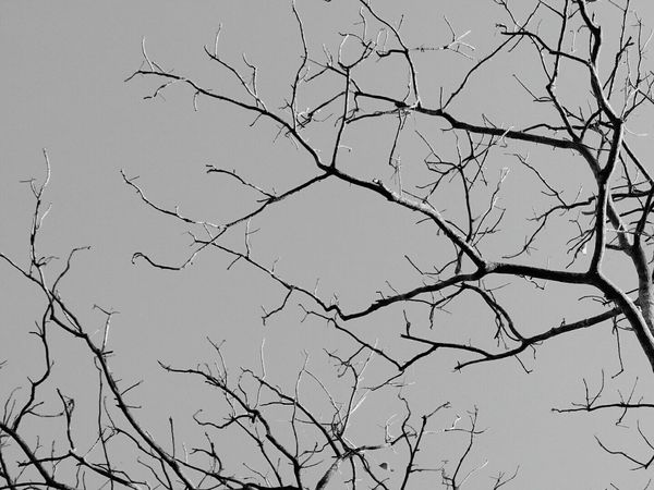 Broken Sky Clear Sky Branch No People Outdoors Tree Sky Nature Beauty In Nature B&w Photo B&W Collections B&w Nature Art Light And Shadow