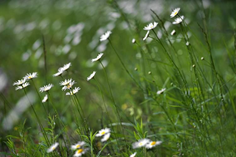;lightning Country Countryside Dasiey Field Fields Flower Flowers Green