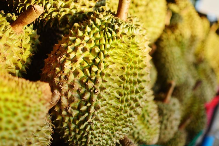 Durian Thai Fruit Thai Thailand Fruit King Of Fruit Durian Cactus Thorn Close-up Plant Spiked Prickly Pear Cactus Natural Pattern Sharp