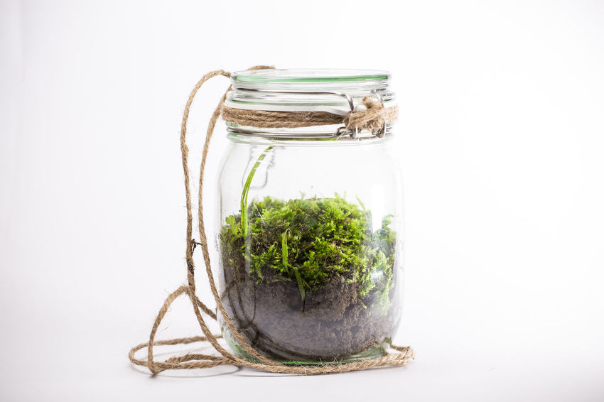 Closed Jar with Mosses inside. Plant Plants Close-up Closed Jar Day Freshness Healthy Eating Herb Indoors  Jar Moss Mosses Mossporn No People Plants And Flowers Studio Shot White Background