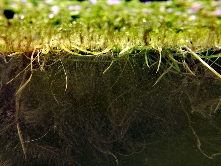 over and under water Close-up Water Grass Green Color No People Aquarium Photography Web Spider Web Complexity Spider Animal Themes Grass Area Blade Of Grass Grassland