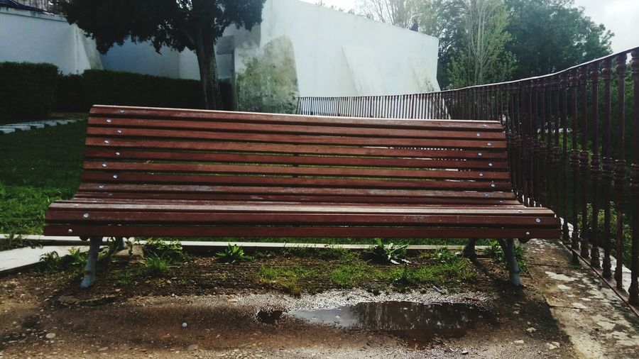 Water Tree Park