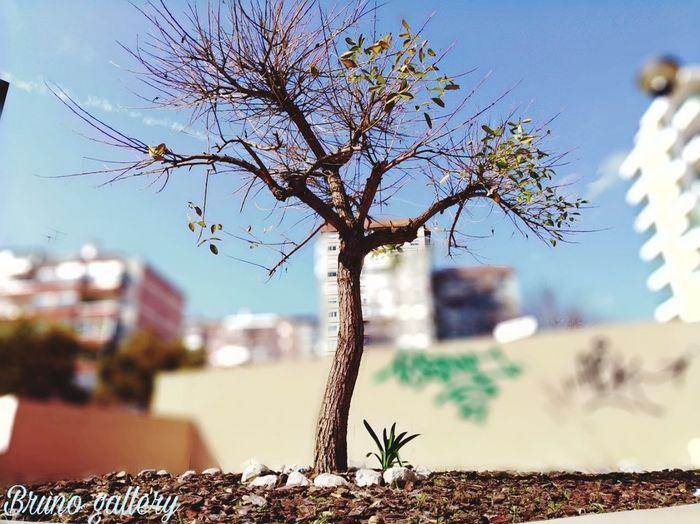 Tree Bird City