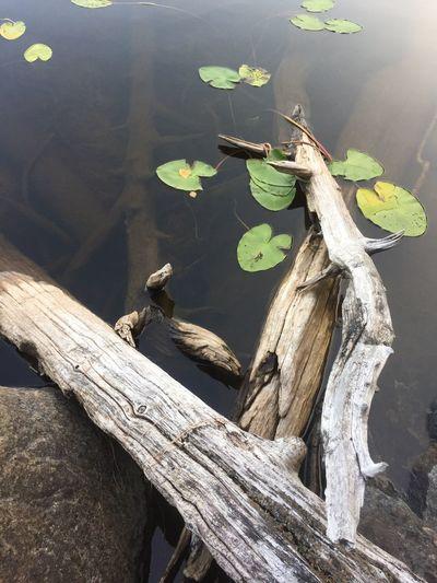 Wood Water High