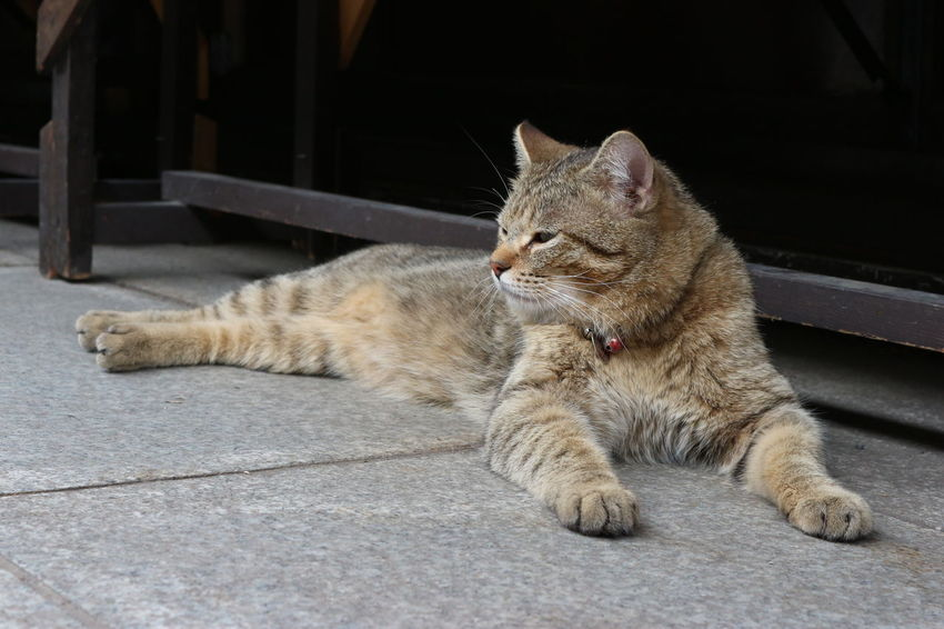 brown lovely cat lying down on the ground Brown Cat Cute Domestic Domestic Animals Domestic Cat Eyes Feline Fur Lazy Lovely Lying Down Mammal No People One Animal Outdoors Park Pets Relaxation Resting Sleepy Vertebrate Whisker