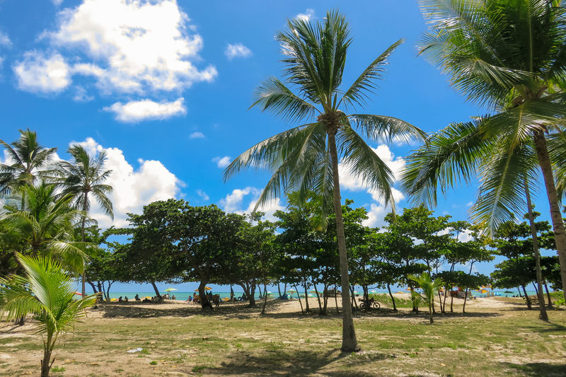 Sunny day on the beach of boa viagem Beach Beauty In Nature Blue Blue Sky Day Growth Nature No People Outdoors Palm Tree Sky Sky And Clouds Sunlight Tree Vacations