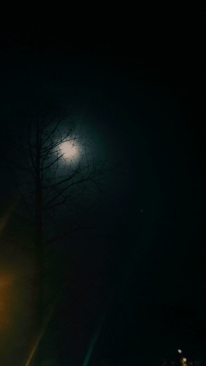 night, bare tree, tree, spooky, nature, branch, moon, outdoors, beauty in nature, no people, sky, astronomy