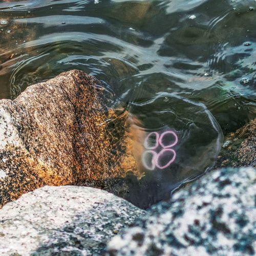 Floating... Floating Quallen Jellyfish Sealife Saltwater Baltic Sea Ostsee