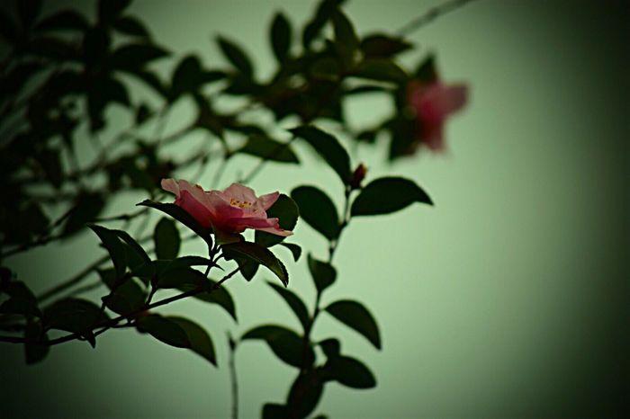日常 Growth Beauty In Nature Beauty In Nature Life Force Nature Day Tree 生きる Flower Pink Color Nature Growth Dark