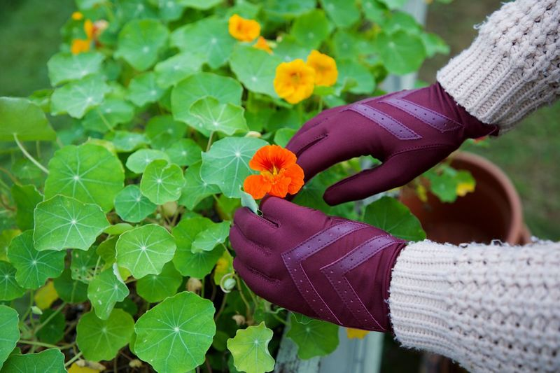 Orange Hand Human Hand Leaf Plant Part Human Body Part One Person Close-up Plant Nature Real People Freshness Flower Growth Holding Day Focus On Foreground Green Color Flowering Plant Beauty In Nature Outdoors