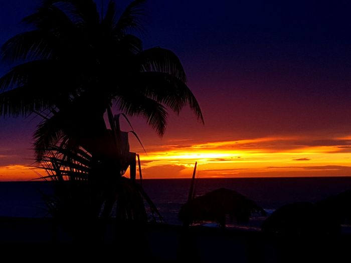 Despedida Varadero Cuba #VaraderoCuba Tree Sea Sunset Beach Palm Tree Water Silhouette Orange Color Sky Horizon Over Water