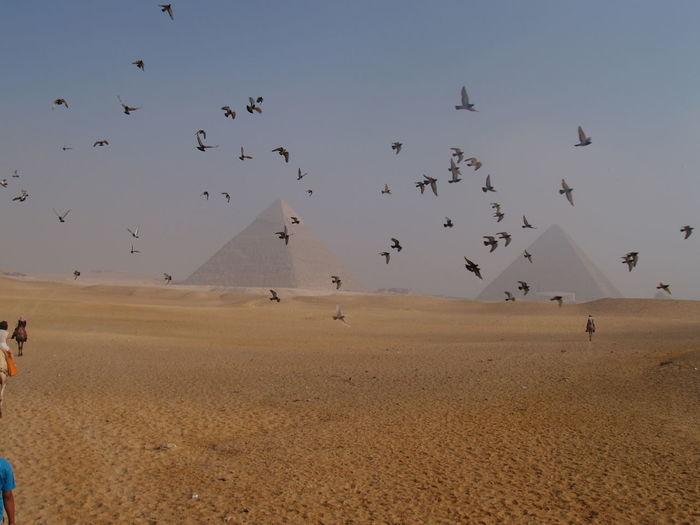 Flock of birds flying at desert