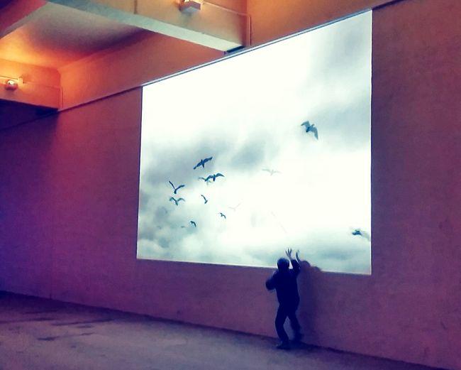 Chasing seagulls Barryisland WhitmoreBay Enchantedbeach Projection Wales