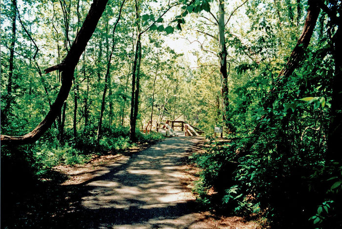 Country Road Wooded Trail Beauty In Nature Day Forest Growth Nature No People Outdoors Scenics Shadow Sunlight The Way Forward Tranquil Scene Tranquility Tree Tree Trunk Wooded Path The Great Outdoors - 2018 EyeEm Awards