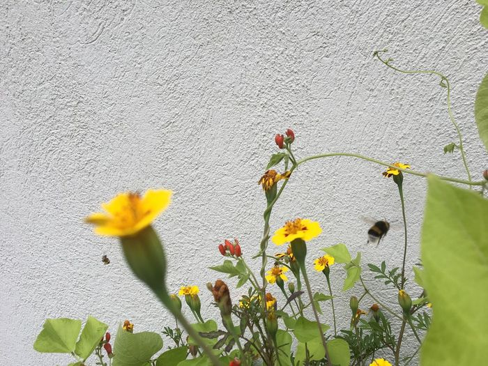 EyeEm Selects Plant Growth Flower Outdoors Nature Day Building Exterior No People Architecture Built Structure Fragility Freshness Blooming Beauty In Nature Close-up a Humble-bee fly away😂 No Edits No Filters