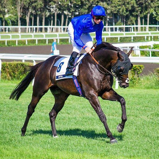 @godolphin at International Racing Festival Horse Racing Horseracing Godolphin Run Veliefendi VeliEfendiHipodromu Istanbul