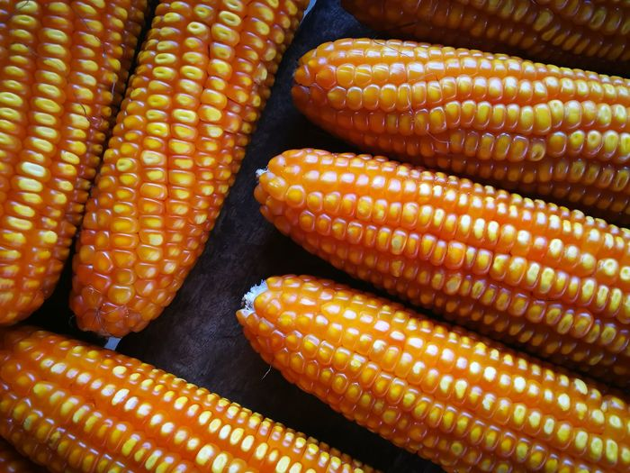 background corn Corn Full Frame Corn On The Cob Vegetable Cereal Plant Raw Food Healthy Lifestyle Close-up Food And Drink Sweetcorn Corn - Crop Bean Crop
