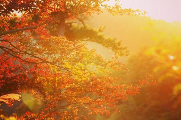 Nishiki🍁 Autumn Kyoto Japan EyeEm Best Shots EyeEm Nature Lover Tadaa Community 嵐山 錦