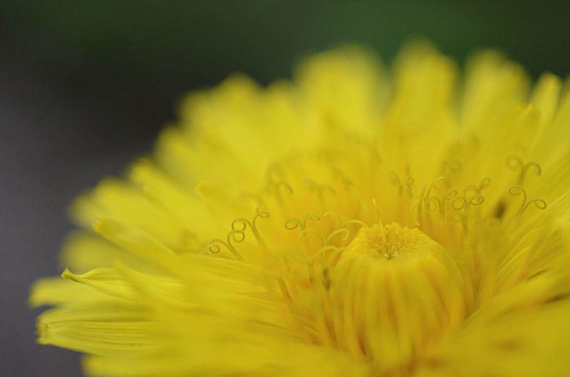Nature Flowers Macro 花