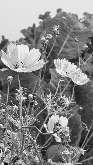 Flowers Flower Head Garden Sunlight And Shadow Walking In The Street On My Way To Work Beauty In Nature Eye4photography  The Week On EyeEm EyeEm Gallery Blackandwhite Photography