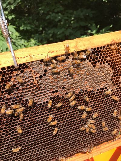 Frame Beehive Outdoors Farm Life Honey Comb Nature Bees Honeybees