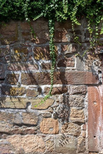 Plant Wall Architecture Built Structure No People Wall - Building Feature Brick Wall Day History Nature Stone Wall Brick The Past Growth Tree Outdoors Solid Ancient Full Frame Building Exterior Ancient Civilization Altstadt Marburg An Der Lahn