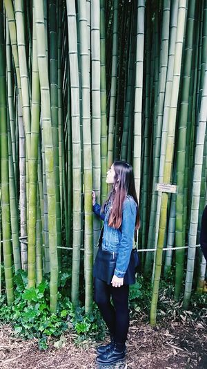Freedom Authentic Moments Taking Photos Hugging A Tree Nature Bamboo Garden Peaceful Gerish