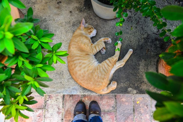 Domestic Cat Domestic Animals Animal Themes Mammal Pets Leaf One Animal Plant High Angle View Outdoors Feline Sitting Cat Day Low Section Nature No People Kitty Neko
