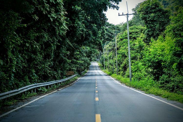 Street amidst trees