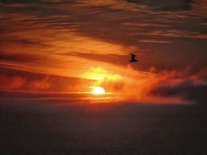 Sunset Spring Has Arrived Spring Sunset Amazing Sunset Bird Flying At Sunset Another Beautiful Sunset 🌅 Sunset And Sea Sunset_collection Dramatic Sunset Orange Clouds Sunset Sea View... Love It!  In Front Of Me The Purist (no Edit, No Filter) Reñaca Beach , Chile