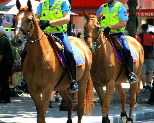 Low section of police officers riding horses in city