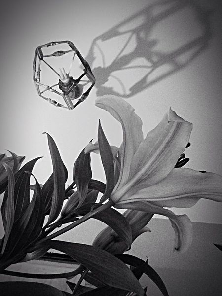 😍😌😊 Flower Black And White Passion For Life Details Black And White Light And Shadow Reflecting...