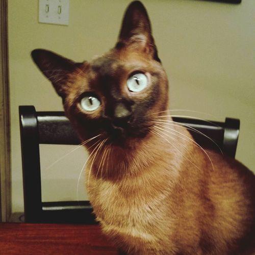 Sweet Rufio First Eyeem Photo