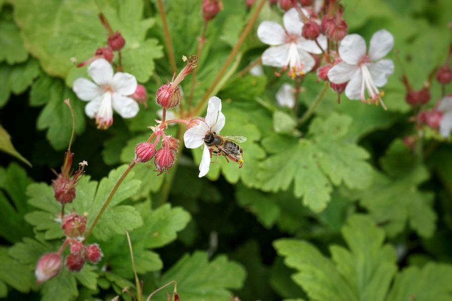 🐝 Urban Nature Enjoying The View Bees Honey Bees  Eye4photography  EyeEm Nature Lover Into The Woods Natur Honigbiene EyeEm Best Edits