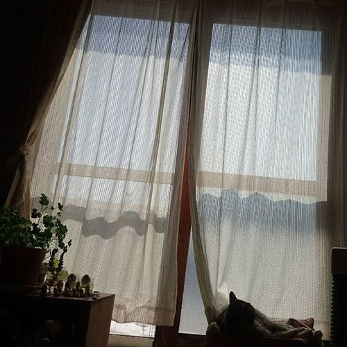 なおphoto 部屋の中から チラリとみったん❤ レースのカーテン長さが足りてなーーーい(笑)