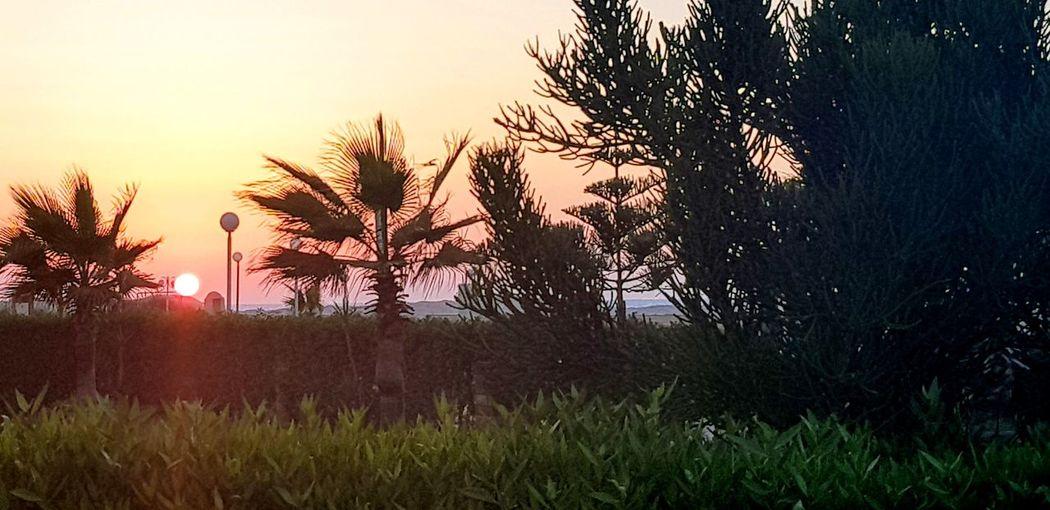 North coast, Alexandria, Egypt Flower Tree Sunset Rural Scene Cereal Plant Backgrounds Field Flower Head Sun Agriculture Single Tree Dramatic Sky Atmospheric Mood Moody Sky Romantic Sky