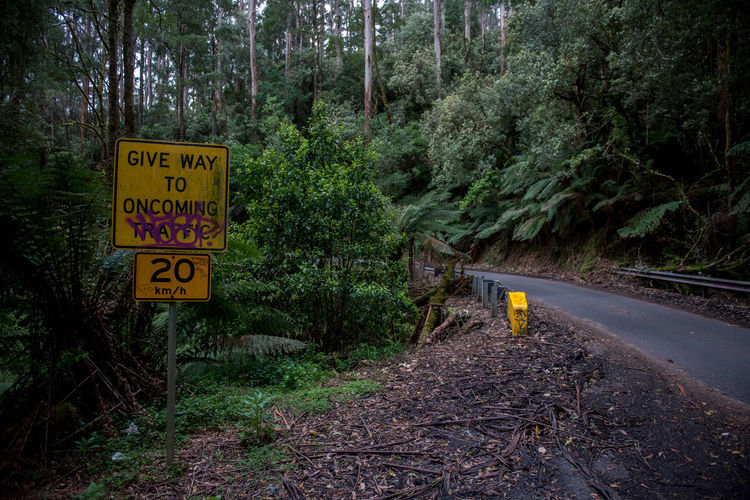 Jungle Rainforest Australia Nature Forest Wildlife Wild Victoria Sign Communication Tree Plant Guidance Yellow Land Text Warning Sign Road Transportation Western Script Information Road Sign No People Direction Information Sign Day WoodLand Outdoors Message