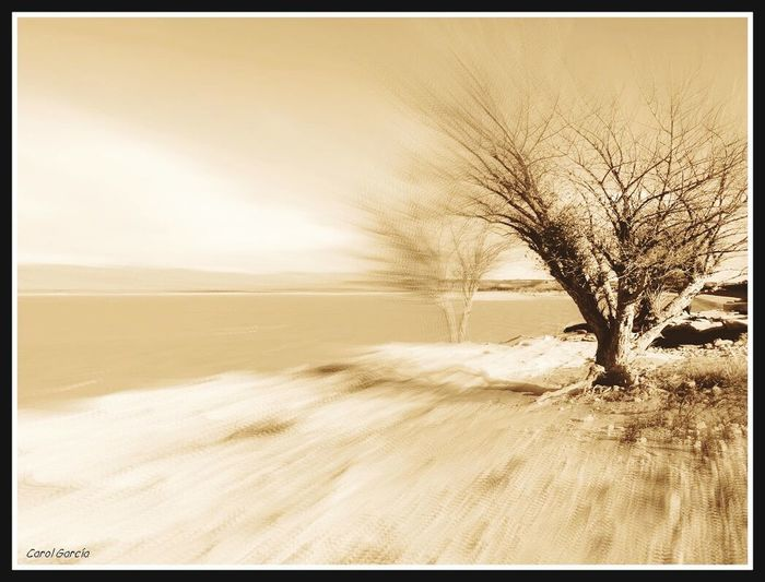 El paso del tiempo Nature Sand Tree Tranquility No People Beauty In Nature Outdoors Sea Horizon Over Water Landscape Isolated Lone Desaturated Sky Day Nature Beautiful Black And White Photo Chumbea Horizontal Majestic