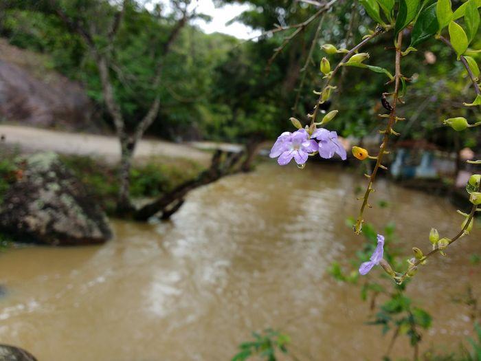 Fotografia Amadora, Natureza Amadíssima Agua Bahia Brazil Day Eden Life Nature Nordeste  Vida Water