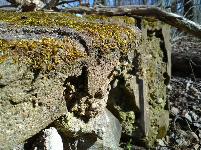 No People Rock - Object Outdoors Nature Close-up Architecture Outside Photography Edited My Way Love To Take Photos ❤ My Point Of View Michigan Up North My Photography. ❤ Ruined Building Ruinporn Ruins Still Beautiful Michigan Outdoors Check This Out! Nature_collection Day Nature On Your Doorstep Tree Area Forest Hello World ✌ Lefted Behind Great Find