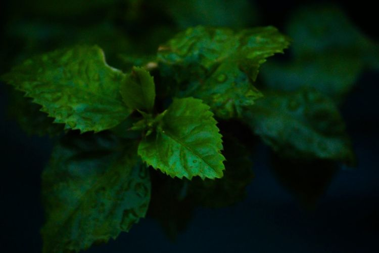 Close-up Leaf Plant Growth Nature Fragility Beauty In Nature Green Color Freshness Day Green Focus On Foreground Natural Condition Large No People Full Frame Growing In Bloom Blossom Beauty In Nature Leaves Internationalart CreativePhotographer Fashion Photography Indian Photographer