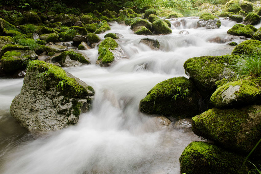 A fast moving stream tumbles over moss covered rocks in a mountain forest in the Japanese Alps. ASIA Flowing Water Forest Stream Green Japan Japanese  Mossy Rocky Alps Beauty In Nature Forest Japanese Alps Long Exposure Moss Motion Nature River Rocks Scenics Water