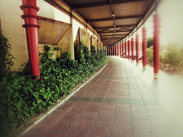 INTU convergence Architectural Column Architecture Built Structure Ceiling Column Corridor Day Diminishing Perspective Eyeemphoto Formal Garden Growth In A Row Lumicar Narrow Passage Paving Stone Pedestrian Walkway Plant Red Repetition Surface Level The Way Forward Walkway