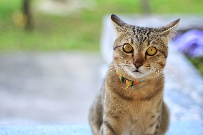 cat look at to