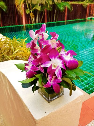 Orchids nearby the pool Holiday Nice Atmosphere Resting Relaxing Flowers Orchids Pool Poolside Swimming Pool Thailand